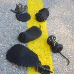 Road Kill: Litter Reimagined